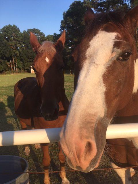 Petrene Soames - Healing with Horses